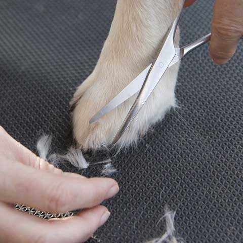 Tidy Paws Dog Grooming